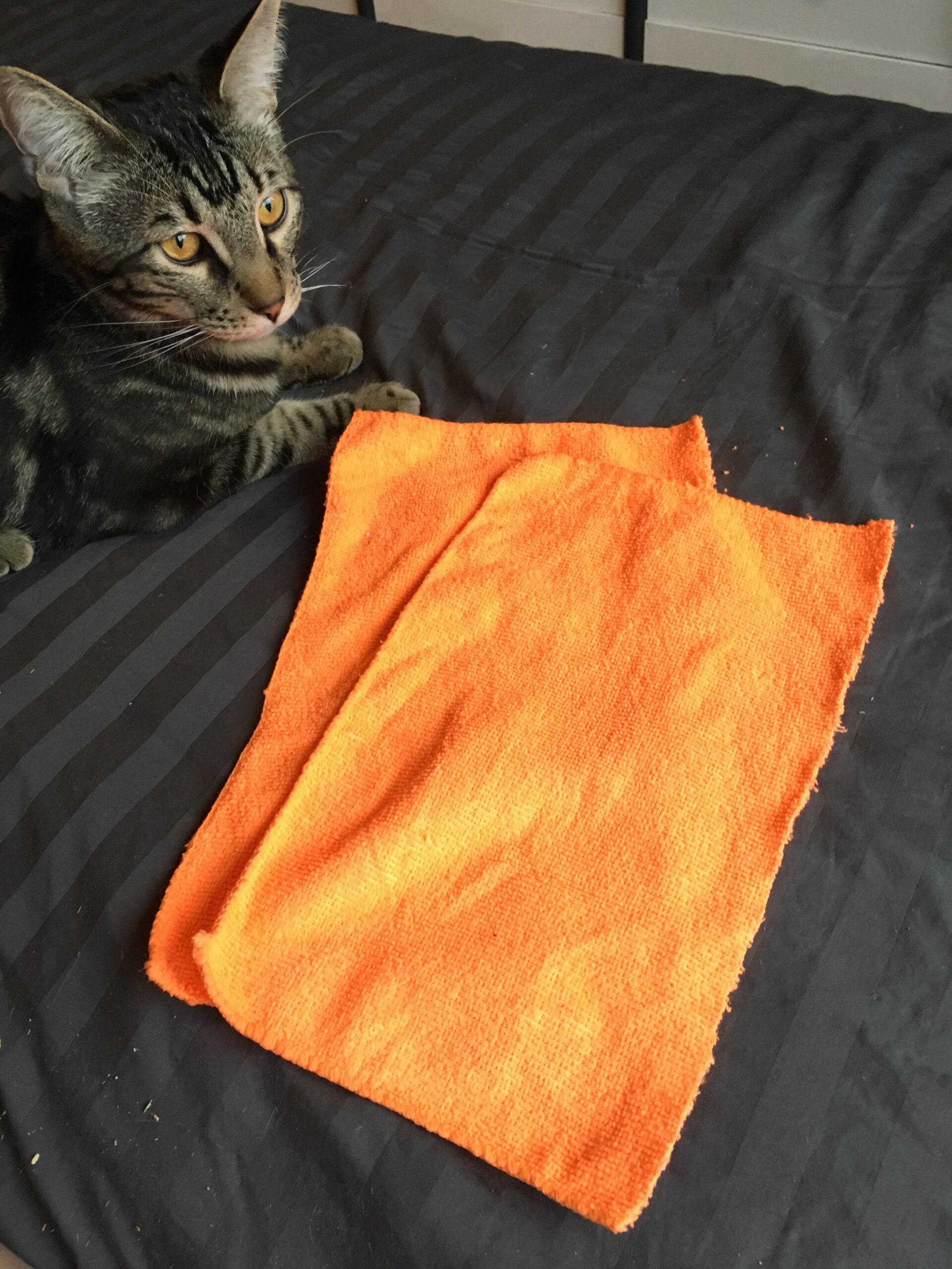 jouet pour chat faire soi m me en moins de 5 minutes diy. Black Bedroom Furniture Sets. Home Design Ideas