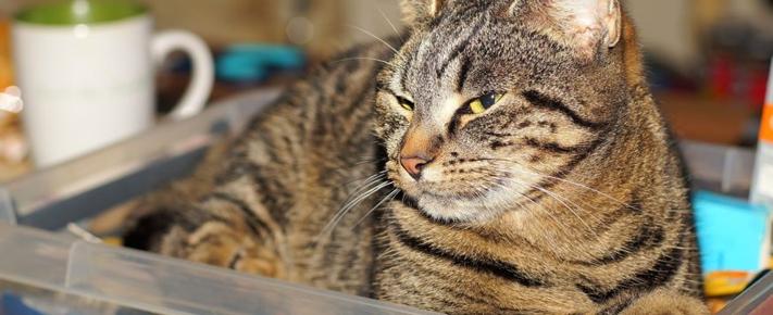 Le chat dans son espace  (Partie 1 de 2) : La cohabitation féline